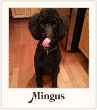 Mingus Poodle